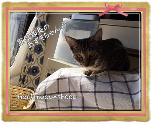リキッドソープ&ぷるぷる&ジェルソープ_あずきちゃん